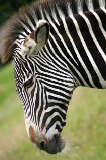 find zebra search engine