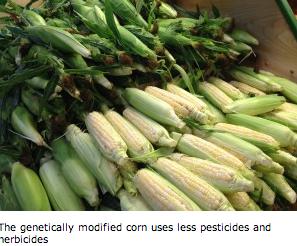 5 Myths About GMOs