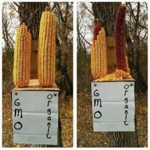 Fake GMO