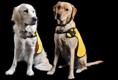 Boomer Voice: Service Dogs Help Dementia Patients and Their Caregivers