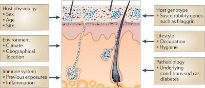 Body Odor and Skin Bacteria