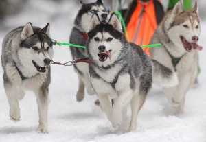 Unless You Are The Lead Dog on the Sled, The Scenery Never Changes
