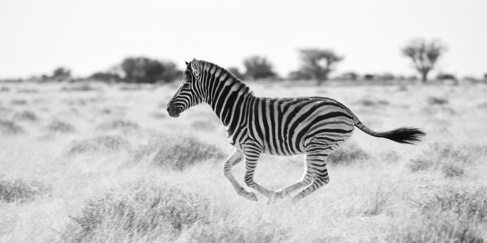 Zebras and oxpeckers: Why resident physicians and social media need each other