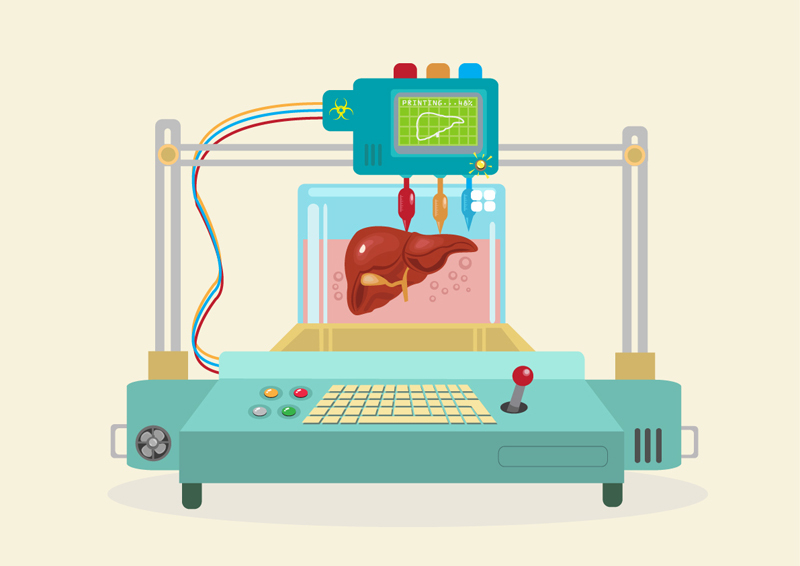 Where Engineering and Medicine Meet: Could 3D Printing Be the Answer to the Organ Shortage?