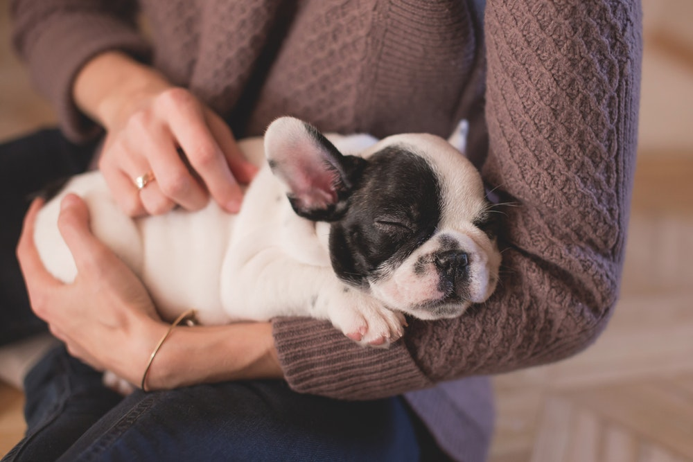 Every Hospital Needs An Animal Therapy Program To Cultivate Wellness