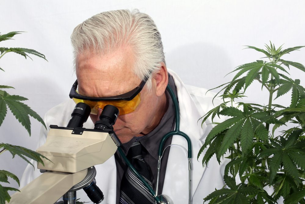 4 Studies From 2018 Highlighting the Health Benefits of Cannabis