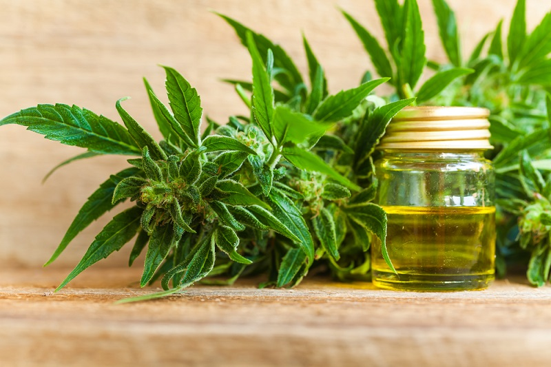 The Uses and the Health Benefits of the Organic CBD Oil