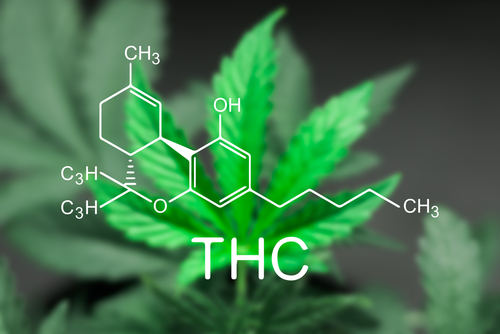 Here's How To Flush THC Out Of Your System Successfully