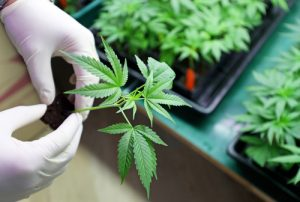 5 Health Benefits of Medical Marijuana You May Not Have Known