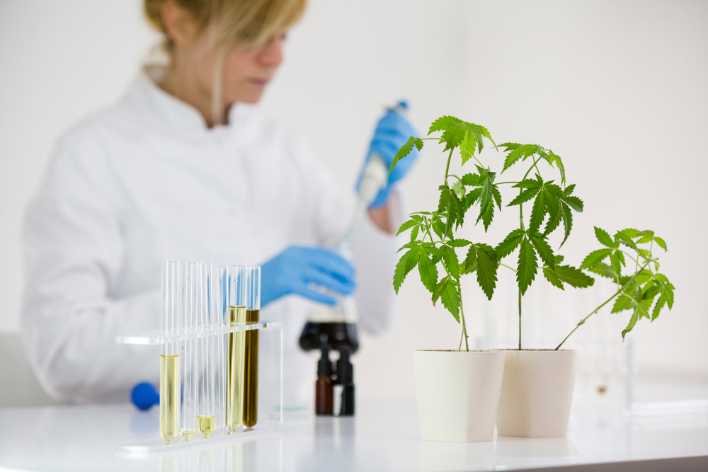 How CBD Has Made Its Way Into The Healthcare System