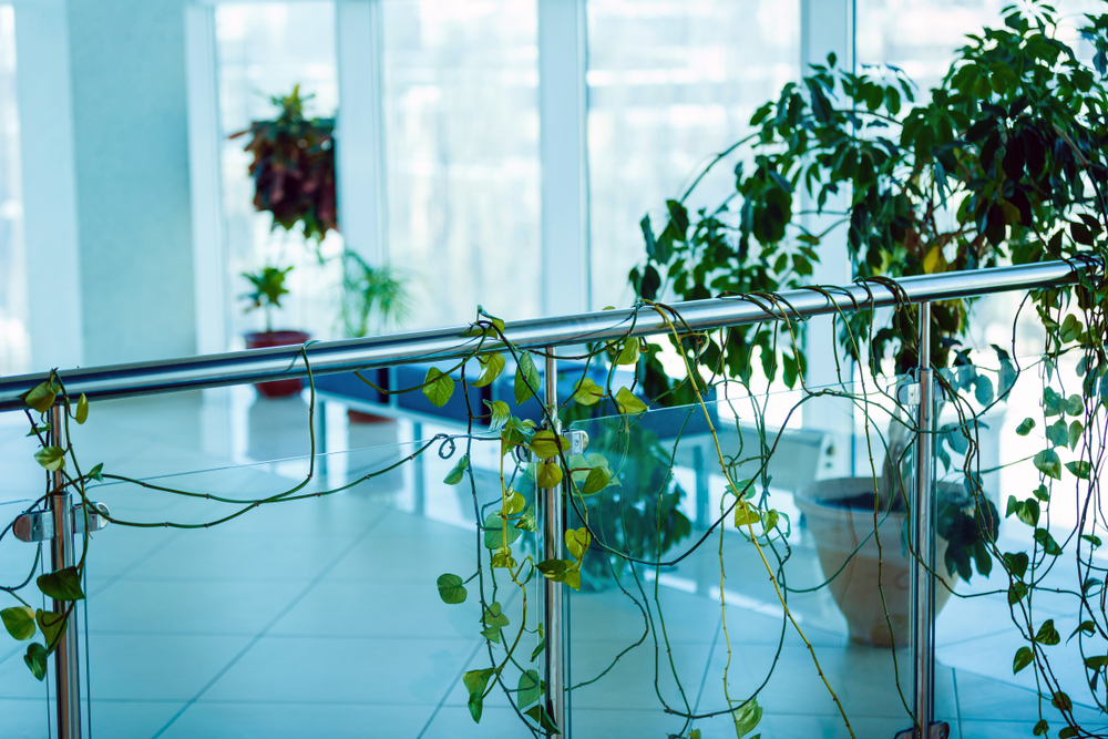 Eco-Friendly Practice: How Hospitals Can Adapt To Protect The Planet